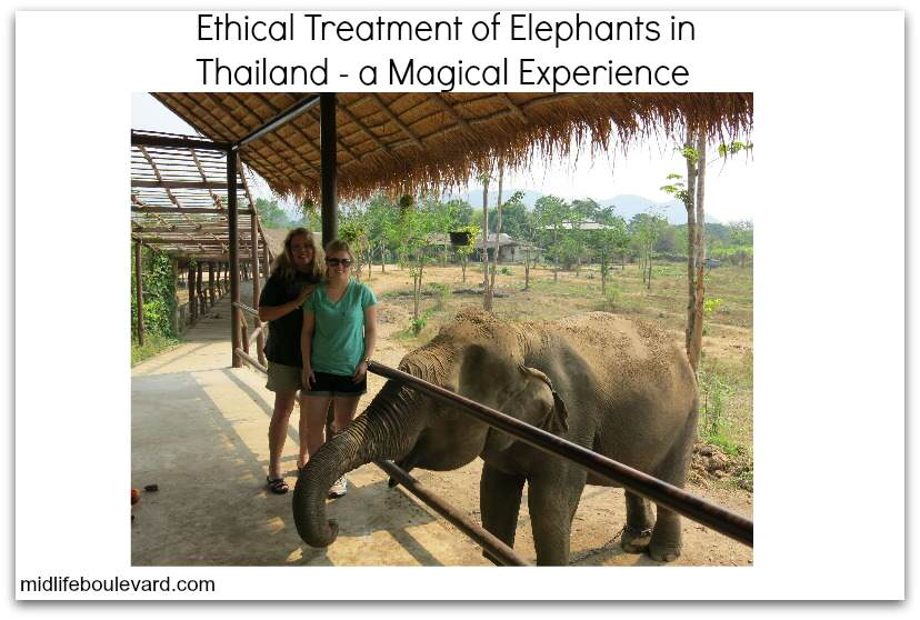 ethical-treatment-asian-elephants-thailand