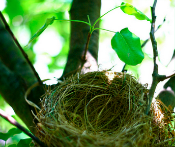5 Ways to Make the Empty Nest Feel Better