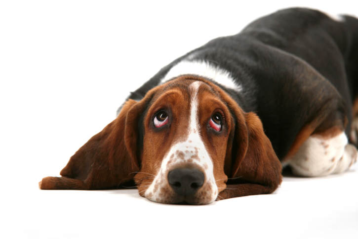 What's in a (Dog's) Name?