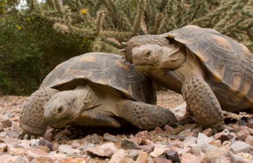 two-tortoises
