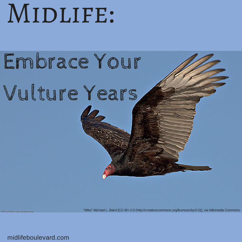 midlife-years-vulture