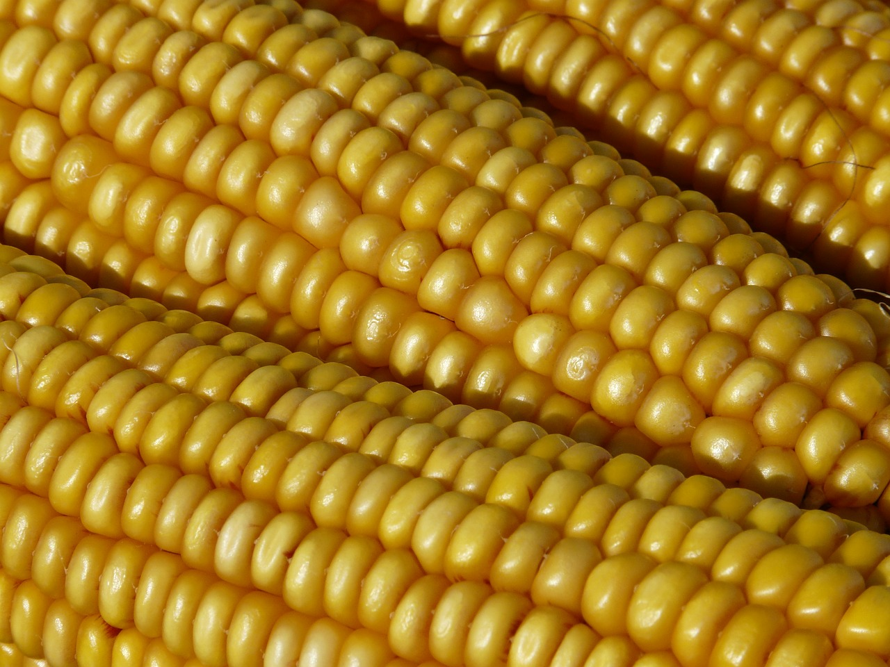 Make the Most of Summer Corn
