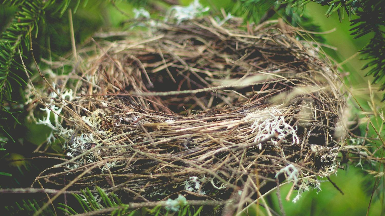 Legitimate Empty-Nest Envy