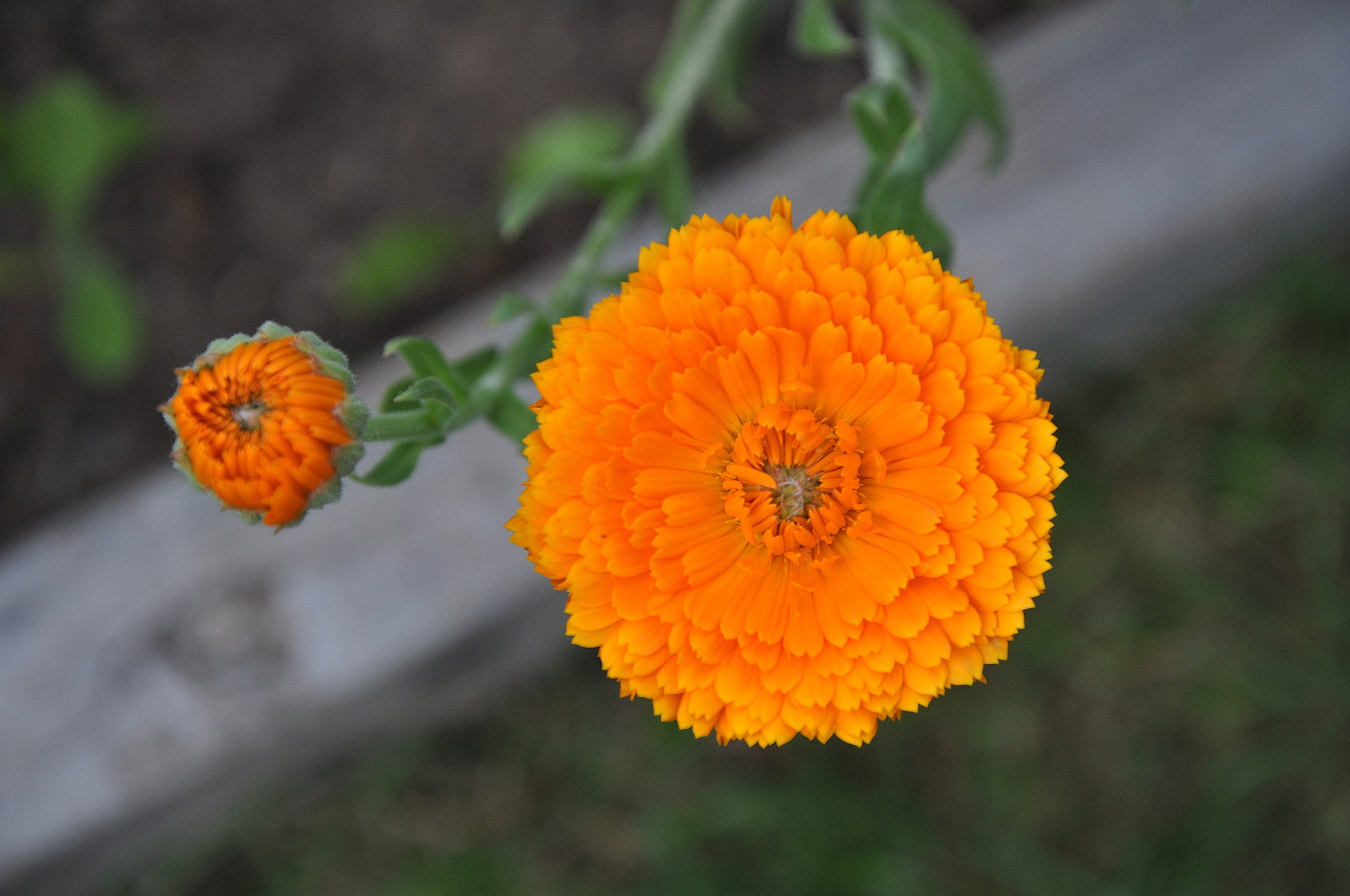 What Marigold Means To Me