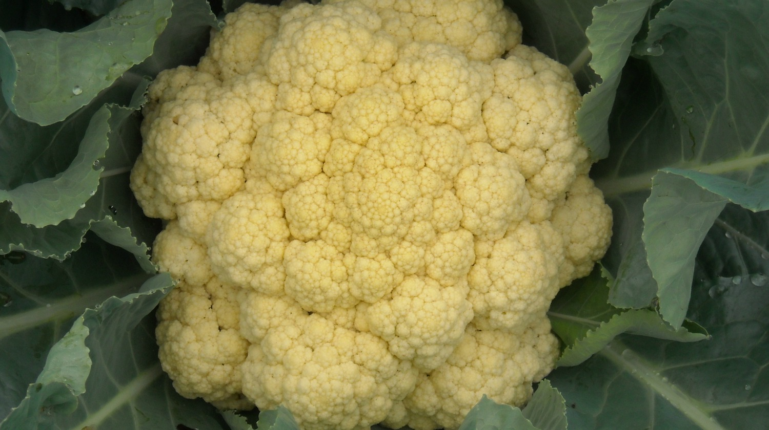 low-carb recipe for mashed cauliflower