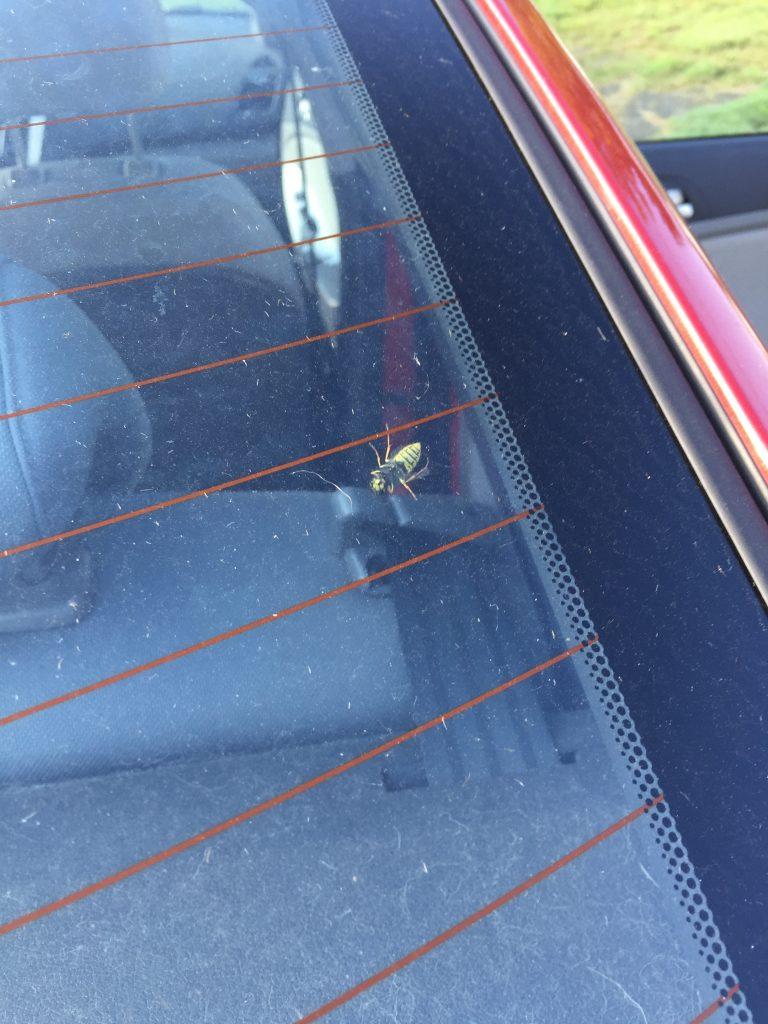 It's Wasp Season. Help!