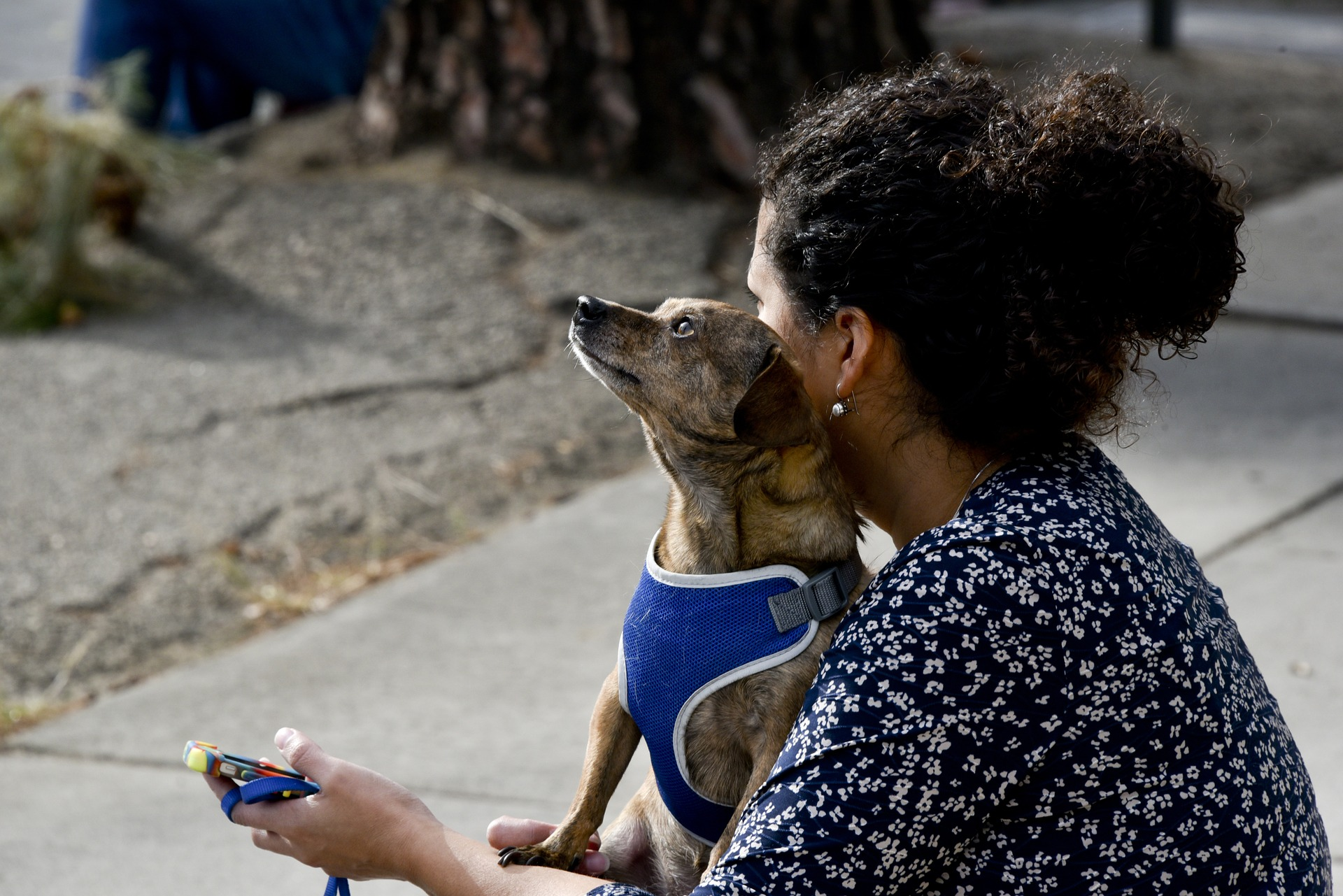 woman's best friend, how your furry friends love you