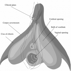 The Clitoris and the History of Sexual Desire