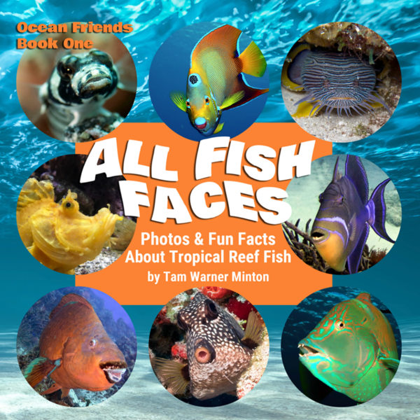 All Fish Faces by Tam Warner Minton