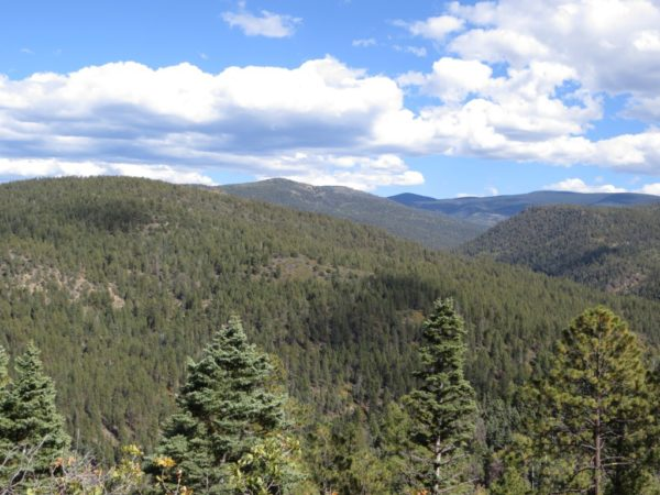 Carson National Forest on the High Road to Taos.