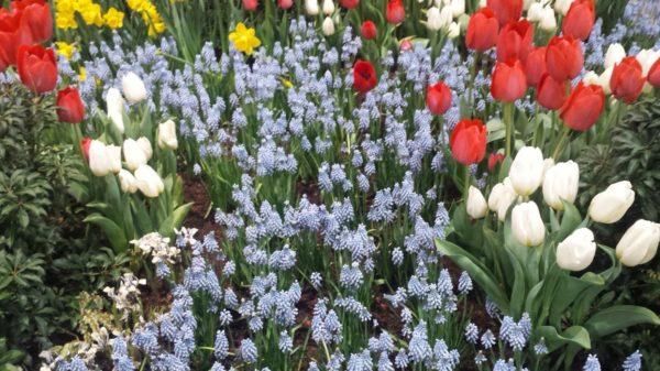Philadelphia Flower Show flowers