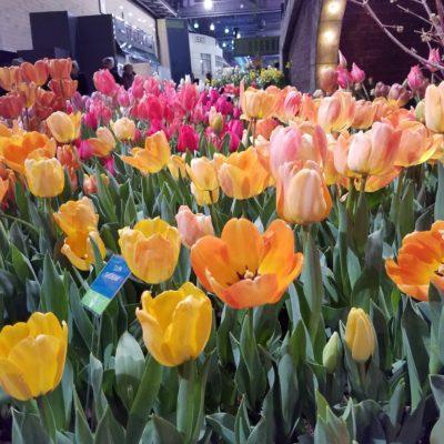 Spring Fever? Plan Your Visit to the Philadelphia Flower Show
