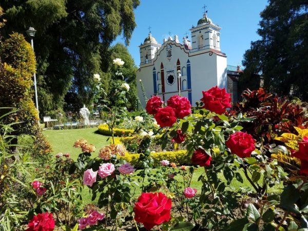 Santa Maria del Tule, Mexico