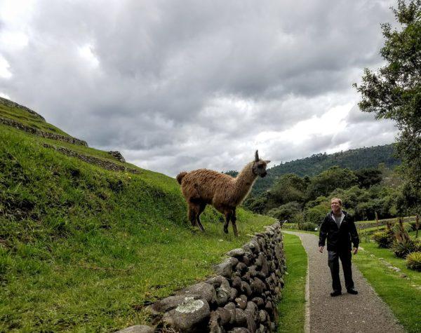 Alpaca, Cuenca, Ecuador