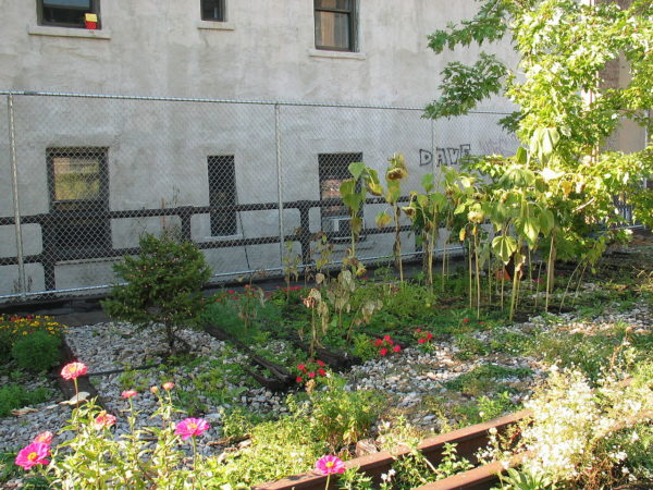 Garden along the elevated High Line in New York City